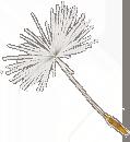 dandelion-4